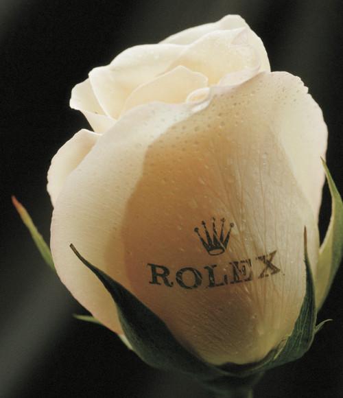 Branded roses